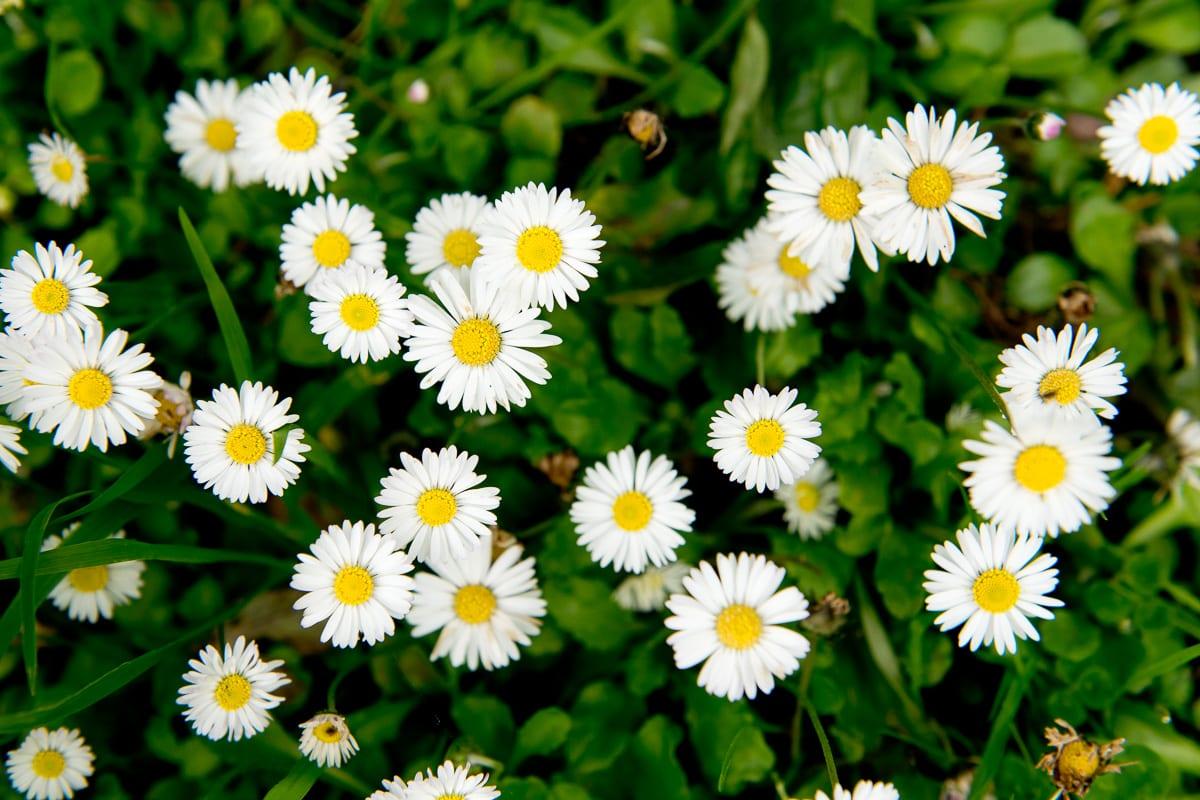 YHA Coverack Flowers