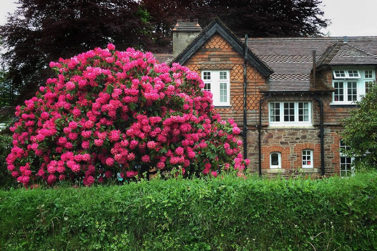 YHA Exford Garden