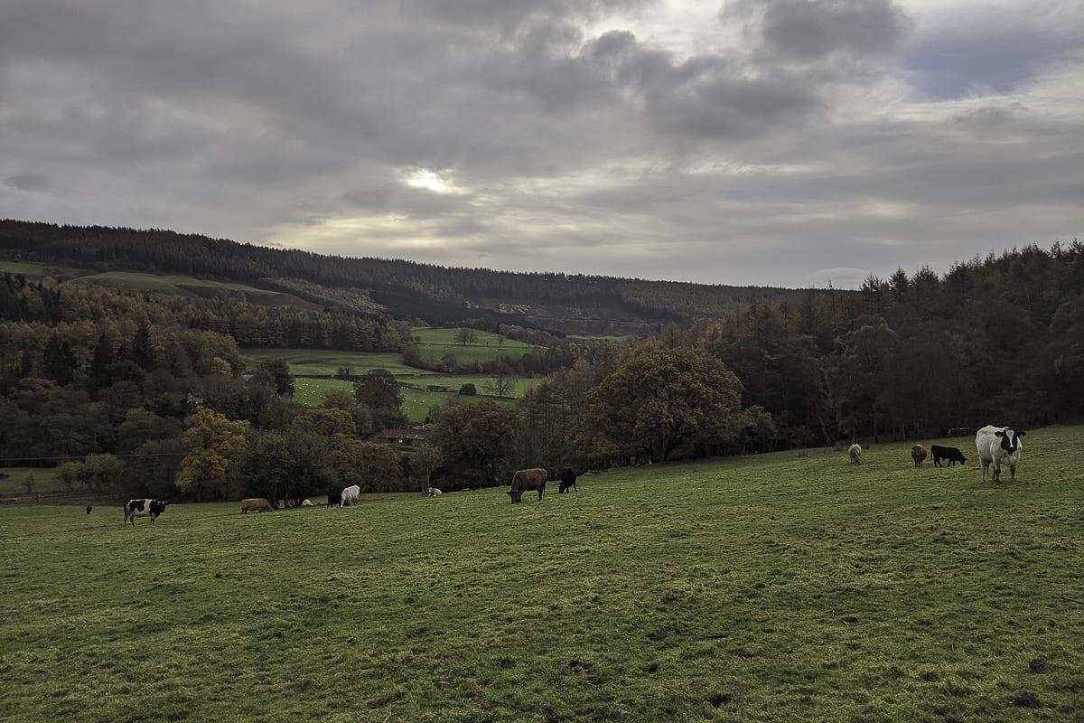 YHA Helmsley View