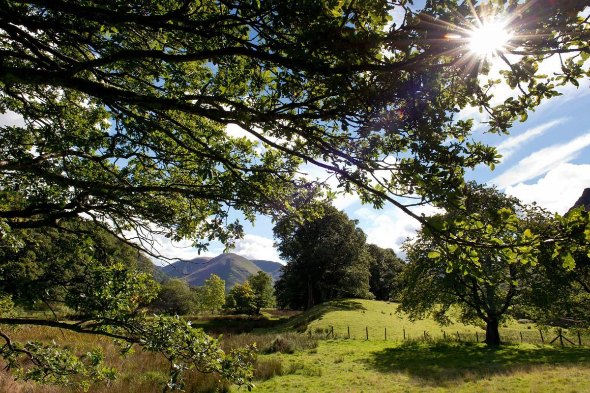 YHA Patterdale grounds with trees